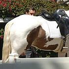 jude law horses16
