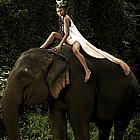 antm elephants02
