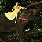 antm elephants08