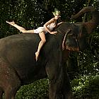 antm elephants10