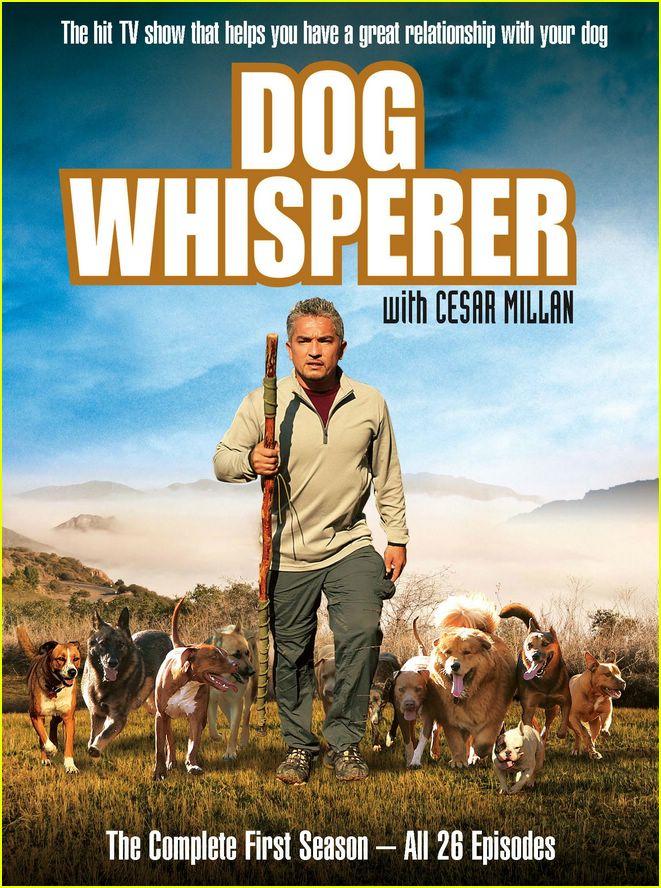 How To Walk A Dog Cesar Millan