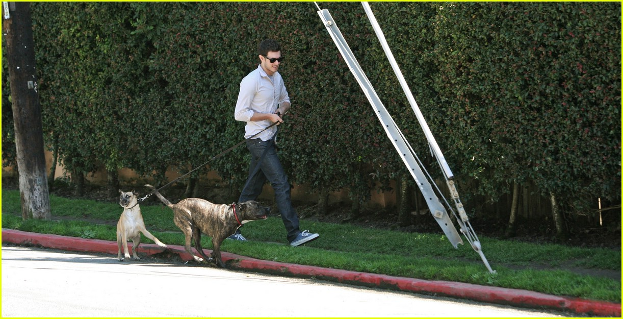 adam brody walking dogs 02