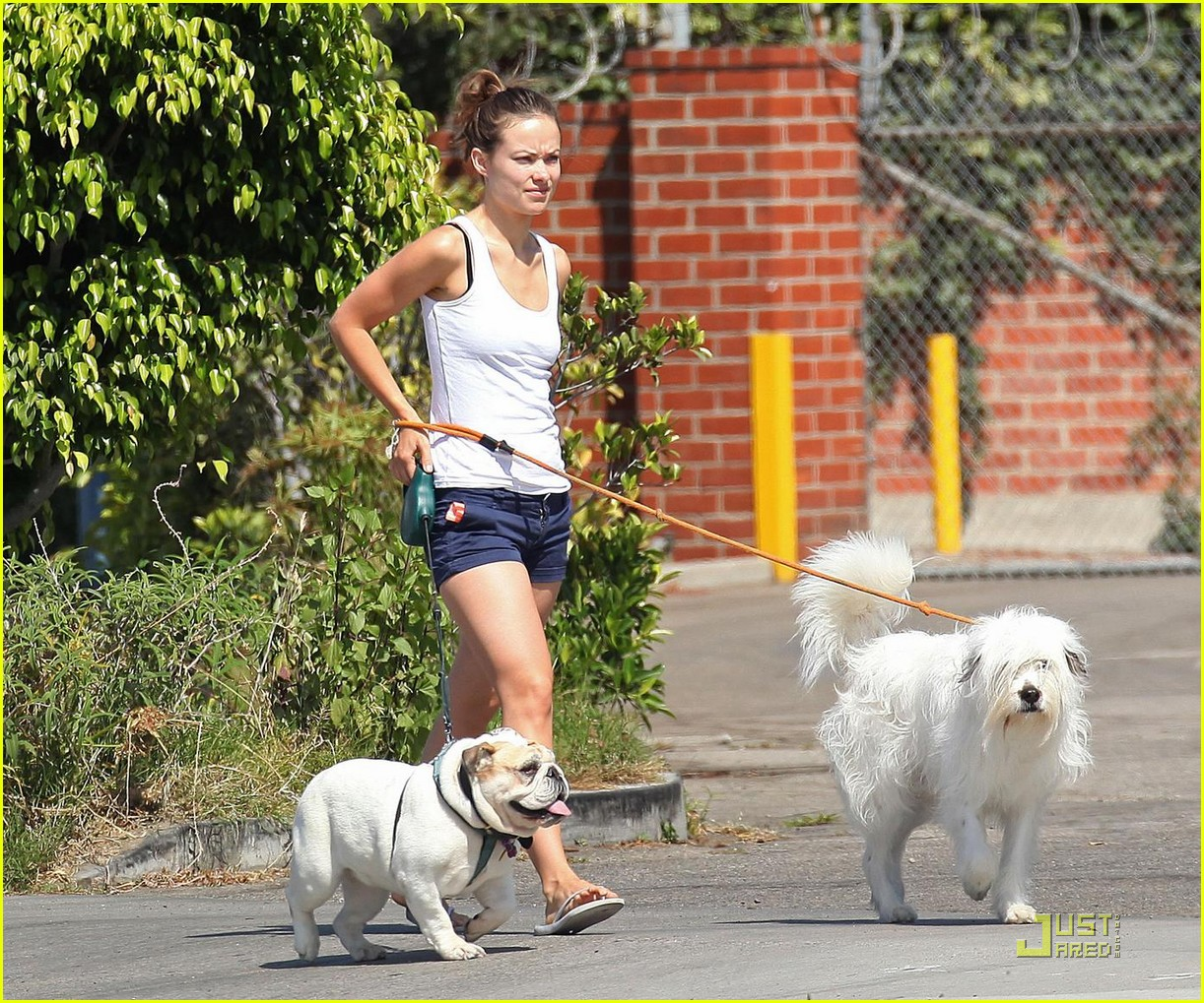olivia wilde pooch passion 032114471