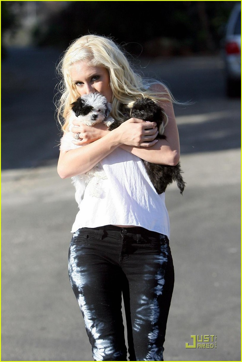 heidi montag spencer pratt new puppies 022269972