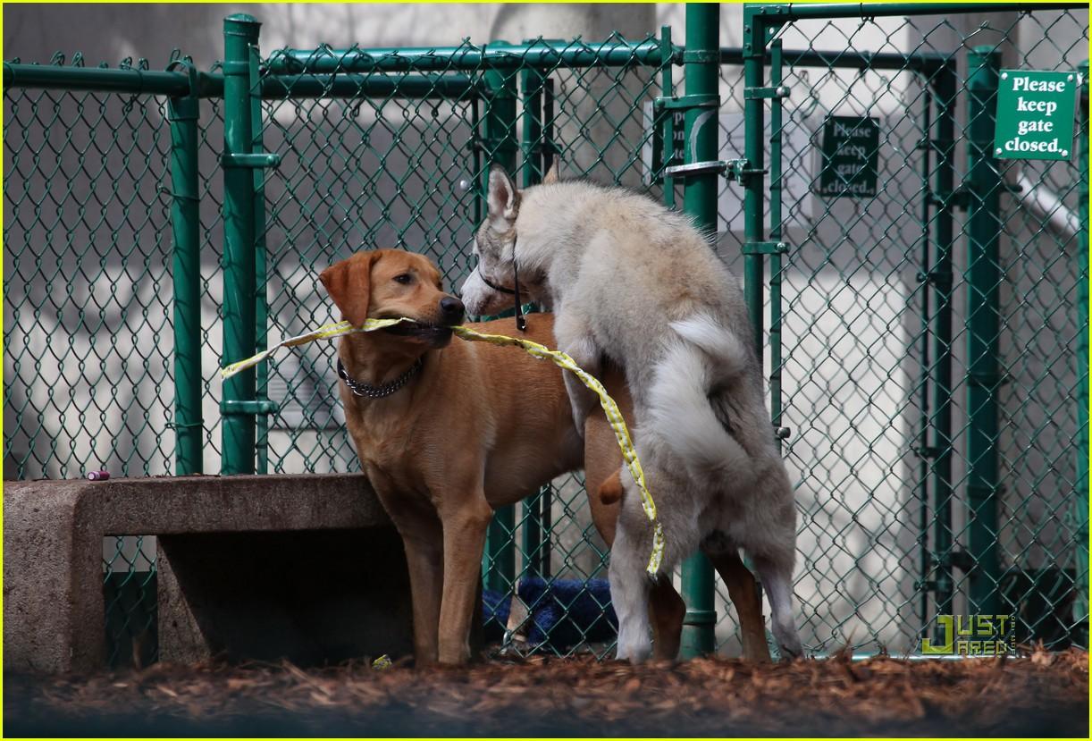 John Krasinski And Dog
