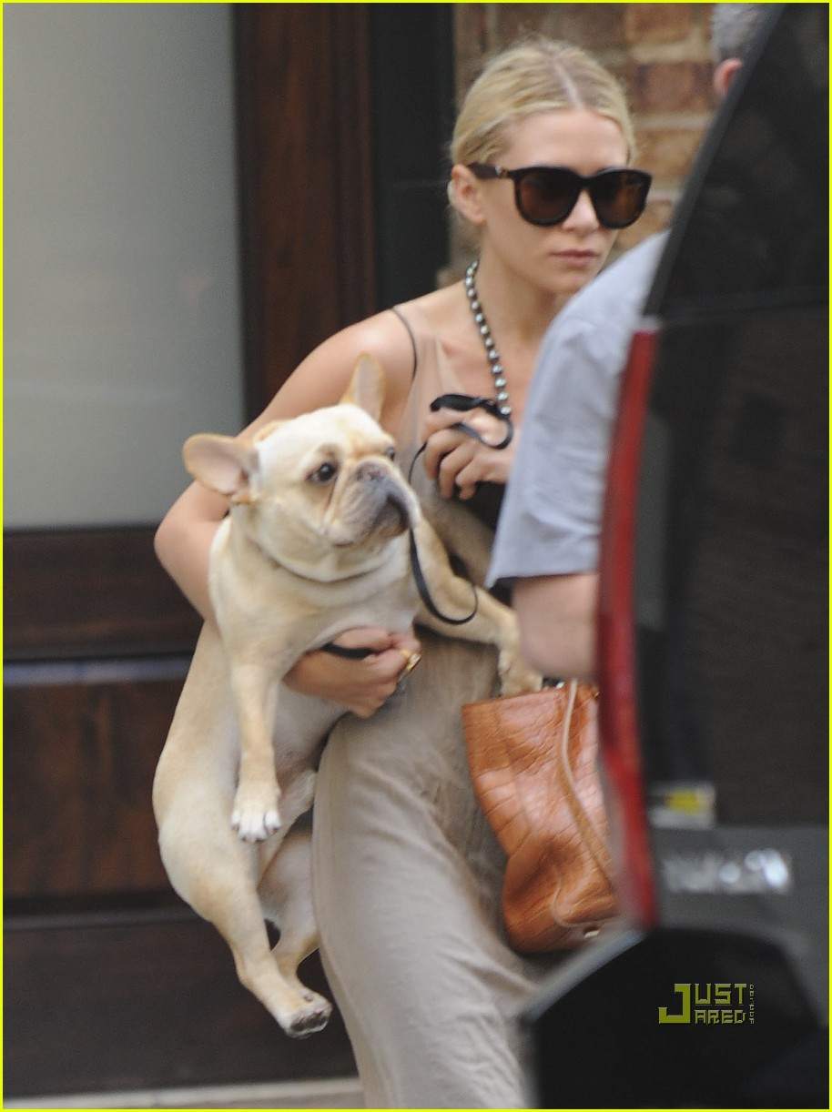 ashley olsen french bulldog 01