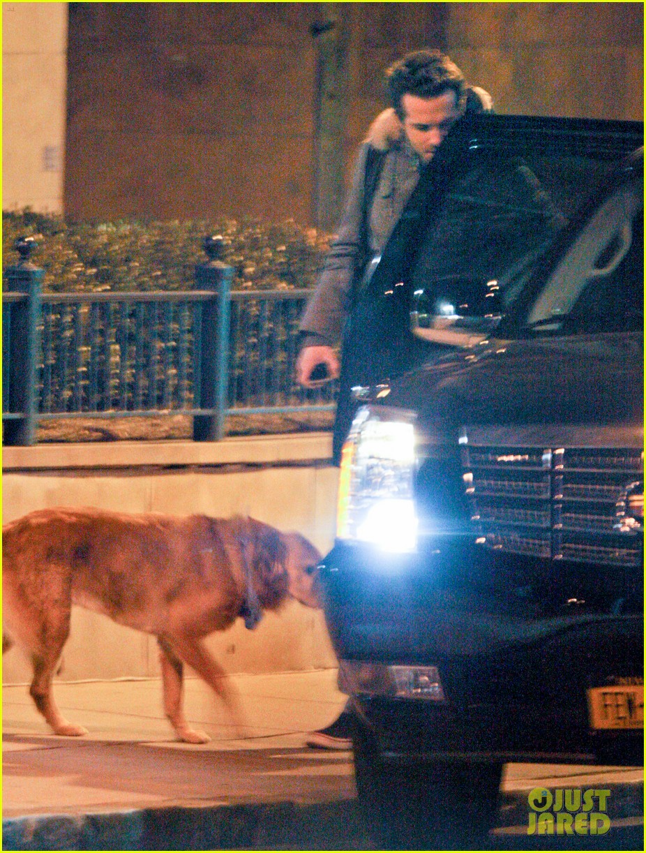 ryan reynolds dog walking 05