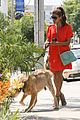 eva mendes beverly hills dog walker 05