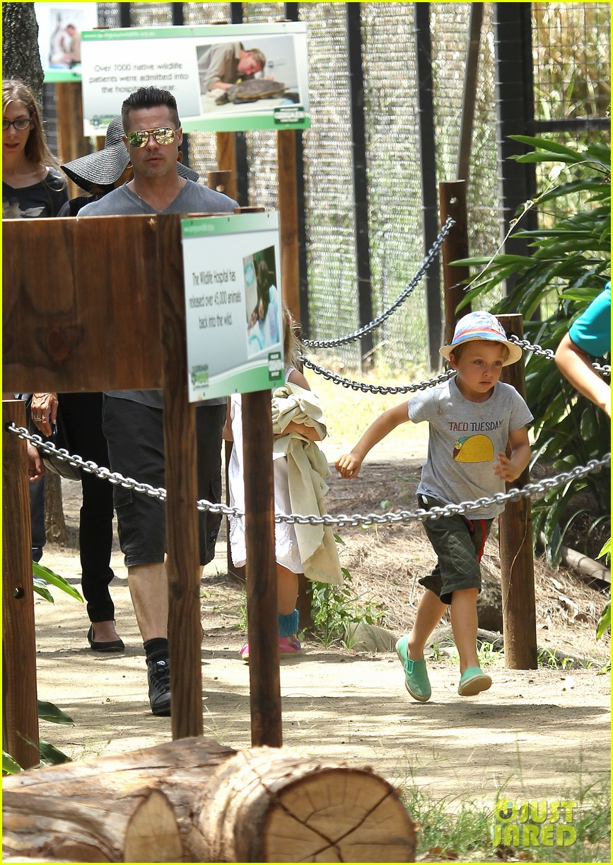 angelina jolie brad pitt visit the zoo with all six kids 09