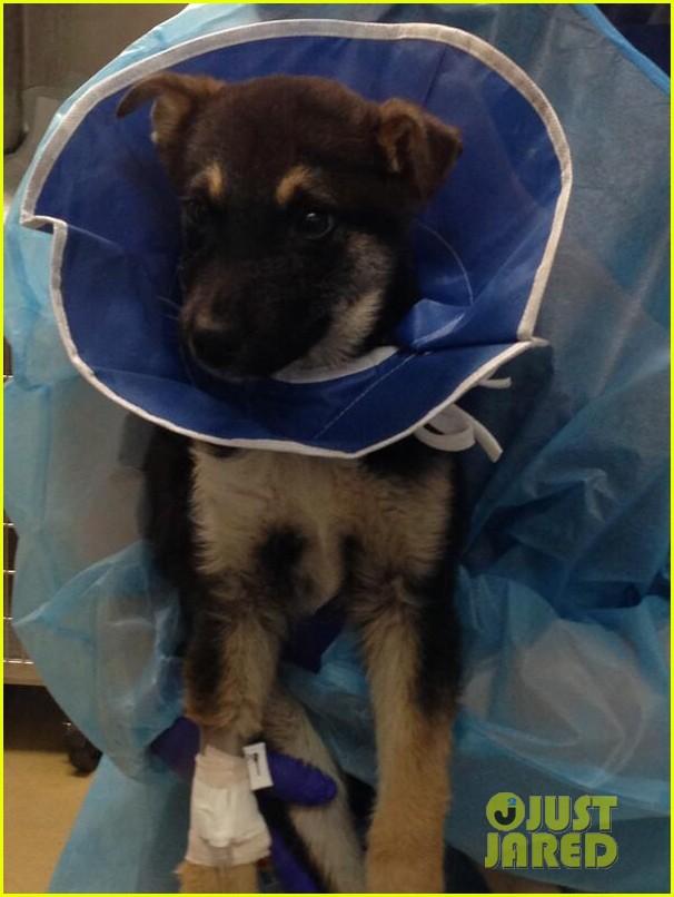 katherine heigl pray for ill sochi dog rescue 02