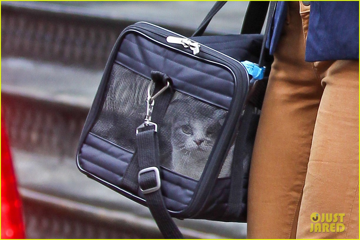 taylor swift brings her cat meredith around nyc in travel carrier 083081779