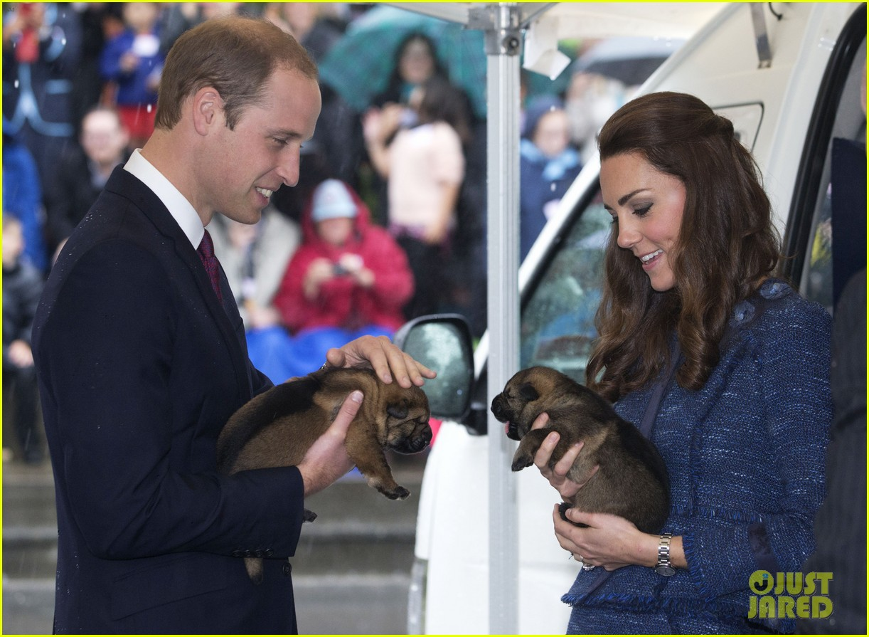 prince george makes appearance parents play with puppies 143092949