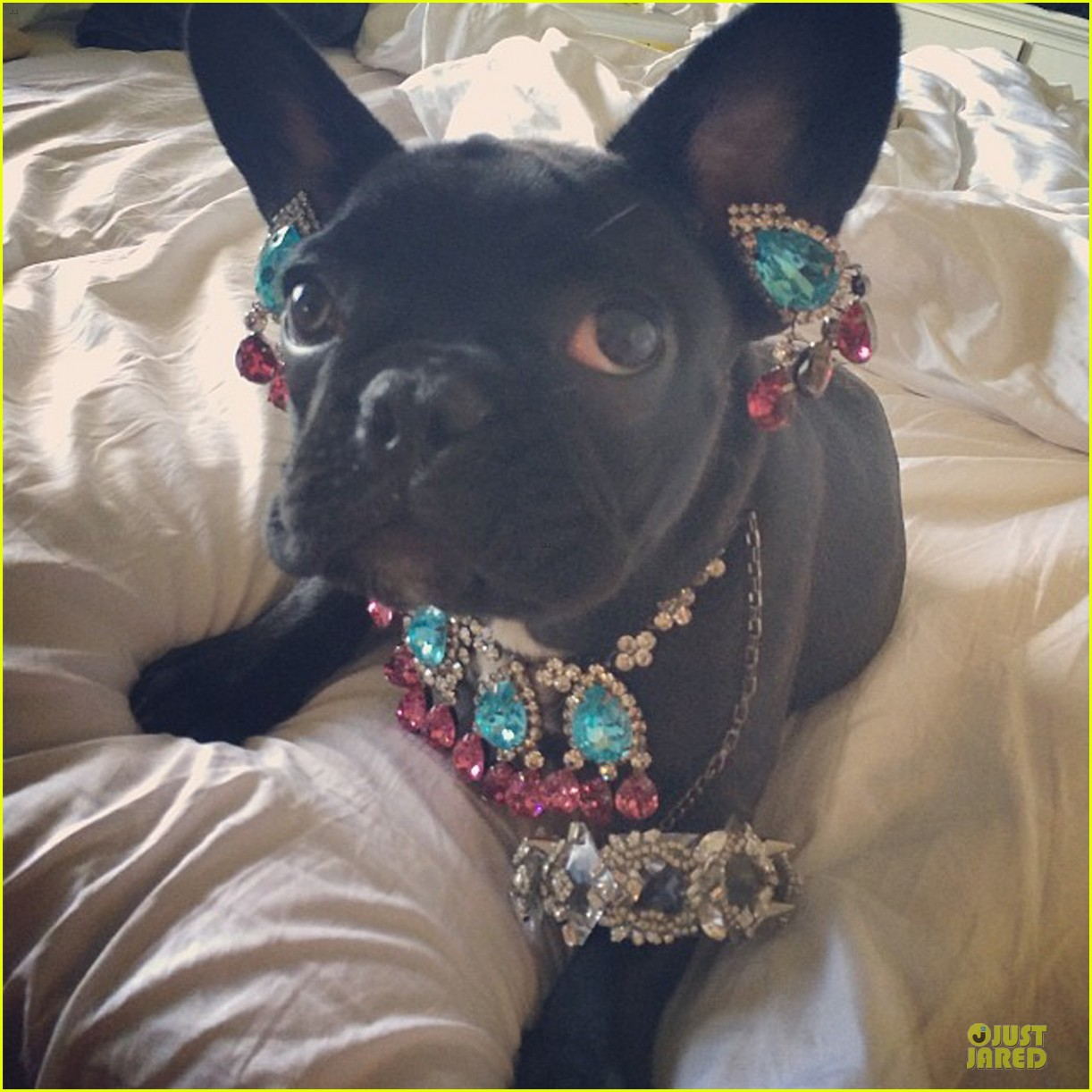 peta thinks lady gaga asia is adorable without jewels 05