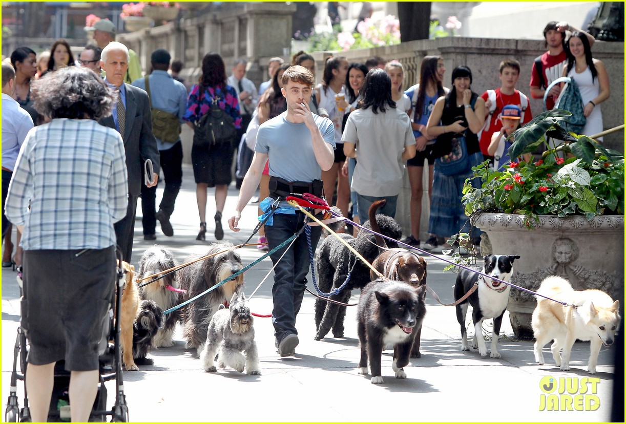 daniel radcliffe dog walker trainwreck nyc set 293147576