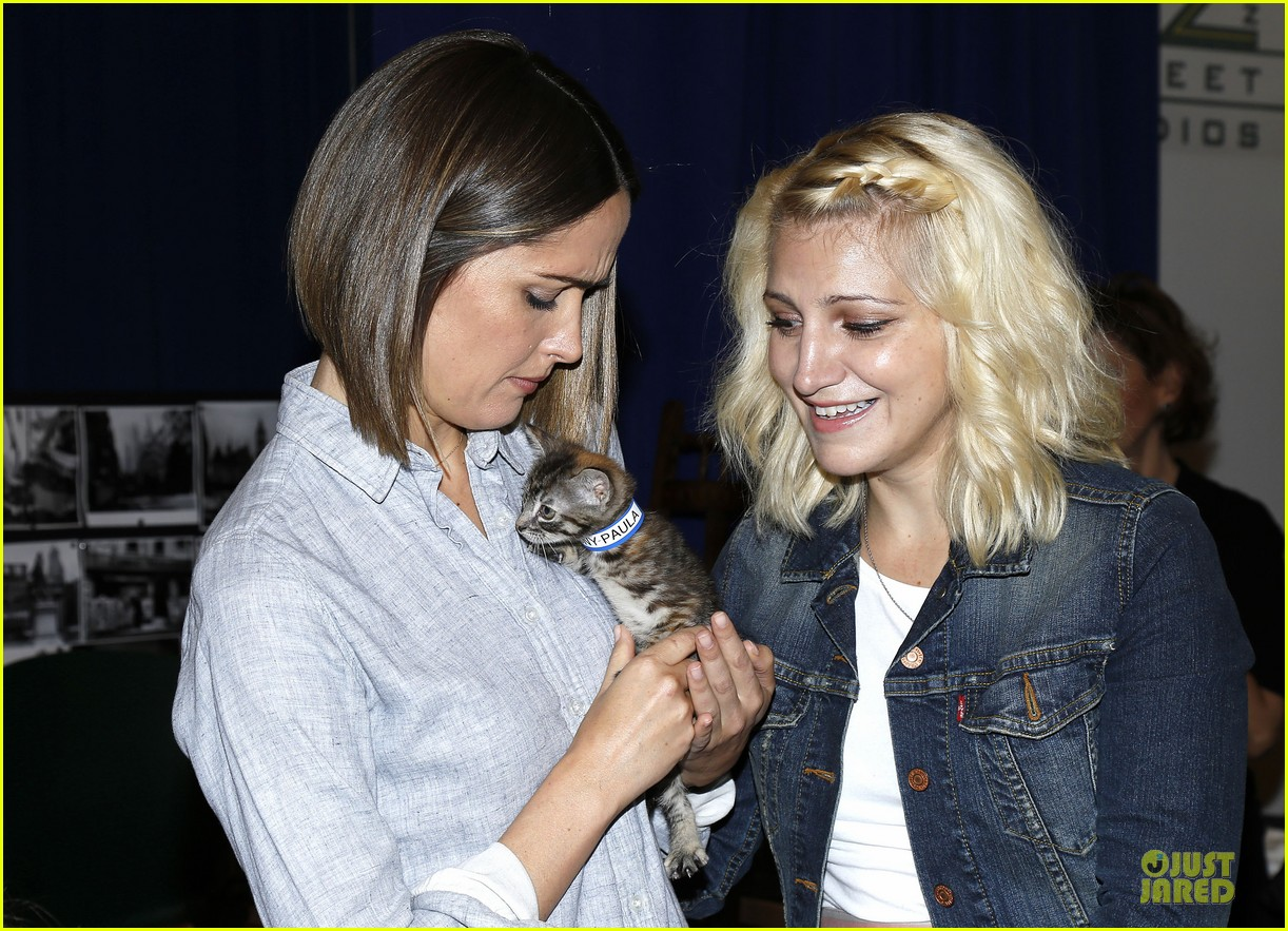 rose byrne looks for the right kittens 103178931