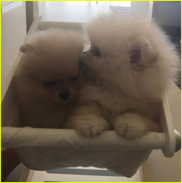 north west puppy name sushi 043920974