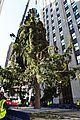 rockefeller christmas tree owl stowaway 04