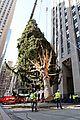 rockefeller christmas tree owl stowaway 12