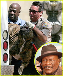 Ving Rhames' Deadly Dog Attack
