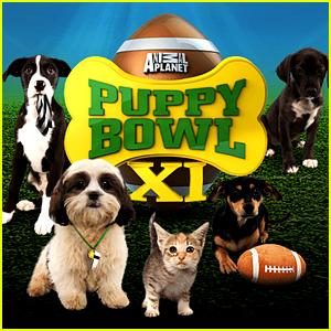 Puppy Bowl 2015 - Watch the Puppy Cam Live Stream Online!