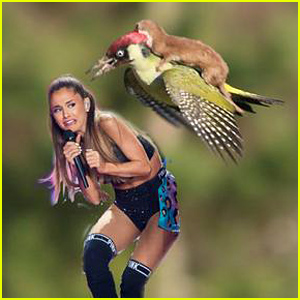 Weasel Riding a Woodpecker Photo Inspires Hilarious Memes!