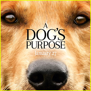 'A Dog's Purpose' Trainers Speak Out About Dog Abuse Video