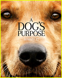 'A Dog's Purpose' Producers Respond to Scared Dog Stunt Video