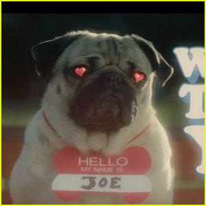 DNCE Recruits Doug The Pug For 'Kissing Strangers' Lyric Video