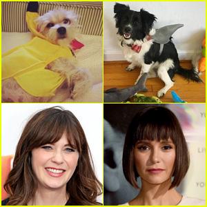 Dog Costume Ideas for Halloween - See How Celebs Dress Their Canine Companions!